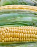 Fresh corn closeup, natural background Stock Images