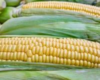 Fresh corn closeup, strong bokeh Stock Photo