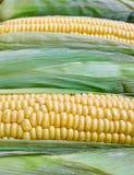 Fresh corn closeup, strong bokeh Stock Images