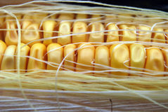 Fresh corn on the cob. Closeup of kernels of corn and corn silk on a partially husked corn cob Stock Photo