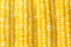 Fresh corn cob Royalty Free Stock Images