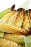 Fresh corn on the cob Stock Photography