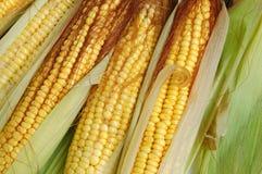 Fresh corn on the cob Stock Photo