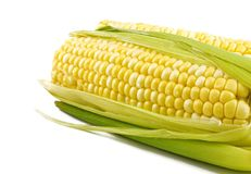 Fresh Corn on Cob Royalty Free Stock Photos