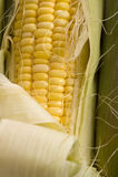 Fresh Corn on the Cob Royalty Free Stock Image