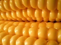 Fresh corn on the cob, close-up photo,macro photography Royalty Free Stock Images