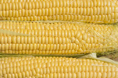 Fresh corn on the cob closeup Royalty Free Stock Photography