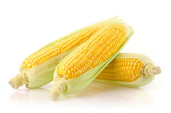 Fresh Corn on the Cob. Corn Ears Isolated on White Background Royalty Free Stock Photos