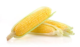 Fresh Corn on the Cob. Corn Ears Isolated on White Background Stock Photography