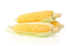 Fresh Corn on the Cob. Corn Ears Isolated on White Background Stock Photos