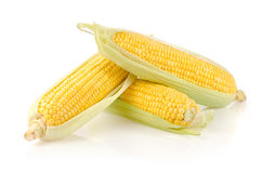 Fresh Corn on the Cob. Corn Ears Isolated on White Background Stock Images