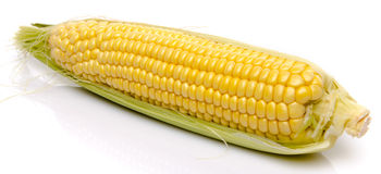 Fresh corn on the cob Royalty Free Stock Photos