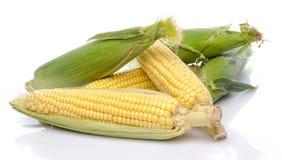 Fresh corn cob Royalty Free Stock Photo