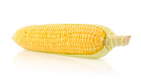 Fresh Corn on the Cob. Corn Isolated on White Background Stock Photo