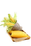 Fresh corn on the cob. Royalty Free Stock Photography