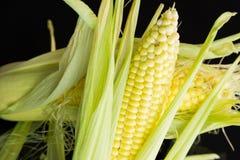 Fresh corn on the cob over a black background Stock Photos