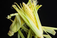 Fresh corn on the cob over a black background Stock Images