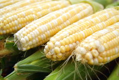 Fresh corn cob Royalty Free Stock Photography