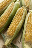 Fresh corn on the cob Stock Photography