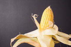 Fresh corn on cob on rustic wooden table, closeup. Fresh corn on cob on wooden table dark background, closeup, Ear of corn stock images