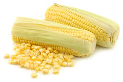 Fresh corn on the cob and some kernels. On a white background Stock Images