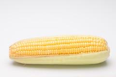 Fresh corn on cob on white background, closeup. Ear of corn royalty free stock photography