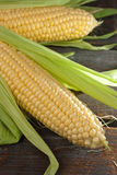 Fresh Corn Cobs Stock Photo