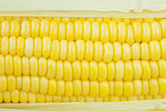 Fresh corn cobs Royalty Free Stock Photo