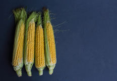 Fresh corn on cobs against a dark background, closeup, copy spac Royalty Free Stock Photos
