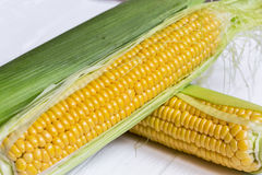 Fresh corn on cobs against  on a light background. closeup Royalty Free Stock Photos