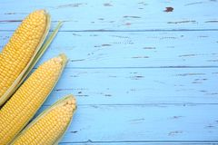 Fresh corn on cobs on a blue wooden table royalty free stock photos