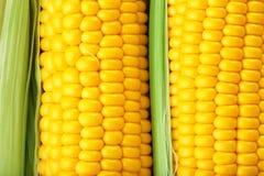 Fresh corn cobs,. Close up Stock Images
