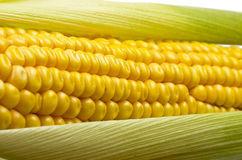 Fresh corn cobs Royalty Free Stock Photography
