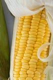 Fresh corn on cobs, closeup. Stock Photos