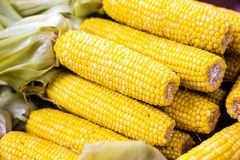 Fresh corn on cobs closeup. Grains of ripe corn. An ear of corn isolated. Corn on the cob, meal ripe juicy tasty corn. Photo of co. Rn background royalty free stock image