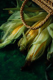 Fresh corn on cobs on green wooden table Royalty Free Stock Photo