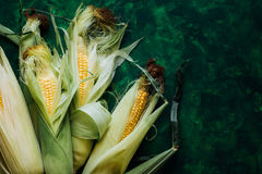 Fresh corn on cobs on green wooden table Stock Image