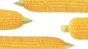 Fresh corn cobs Royalty Free Stock Photo