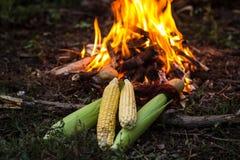Fresh corn cobs near camp fire Stock Photos