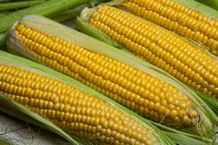 Fresh corn on cobs on rustic wooden table, close up. Sweet corn ears background.  Royalty Free Stock Photography