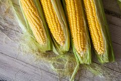 Fresh corn on cobs on rustic wooden table, close up. Sweet corn ears background.  Royalty Free Stock Photos