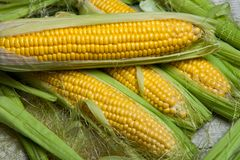 Fresh corn on cobs on rustic wooden table, close up. Sweet corn ears background.  Royalty Free Stock Images