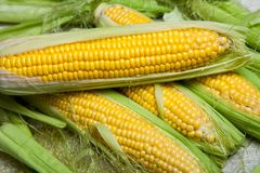 Fresh corn on cobs on rustic wooden table, close up. Sweet corn ears background.  Stock Photos