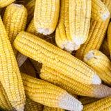 Fresh corn cobs Stock Images