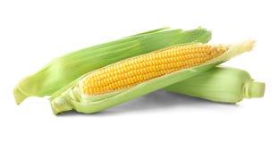 Fresh corn cobs,. On white Royalty Free Stock Photo