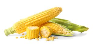 Fresh corn cobs,. On white Royalty Free Stock Image