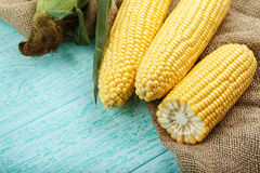 Fresh corn on cobs on wooden table, closeup. Space for text Royalty Free Stock Images
