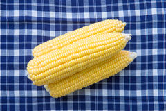 Fresh corn for cooking Stock Images