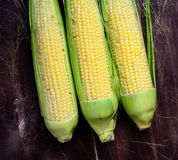Fresh corn ears Stock Photos