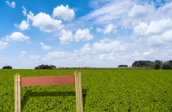 Fresh Corn Field with Sign Stock Photo